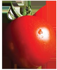 plump, ripe, red tomato